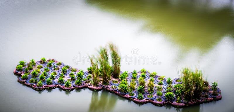 De mens Gemaakte Drijvende Waterweg Singapore van Punggol van het Moerasland royalty-vrije stock fotografie