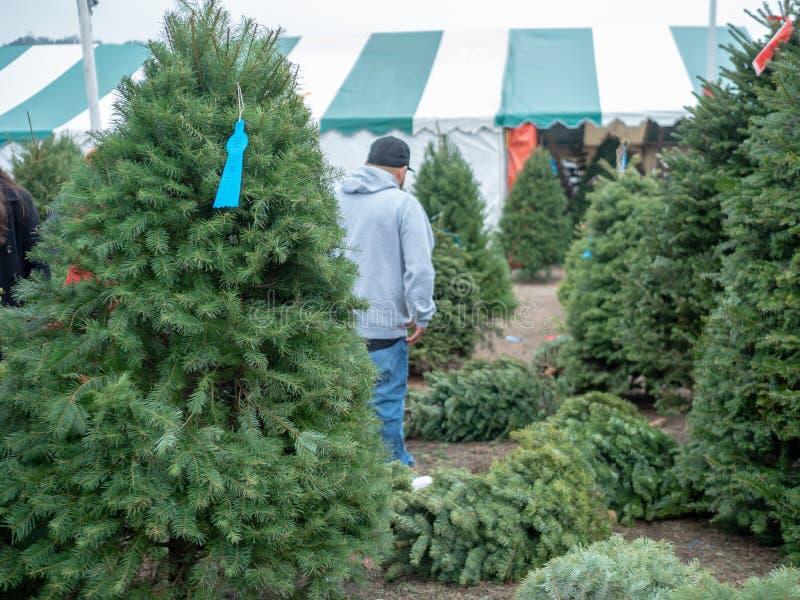 De mens in honkbal GLB doet de boom van Kerstmiskerstmis winkelend in boommarkt met de spar van Douglas binnen vooraan stock afbeeldingen