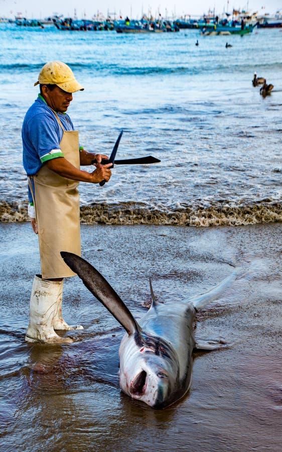 De mens treft voorbereidingen om vinnen van haaien op strand te snijden stock foto's
