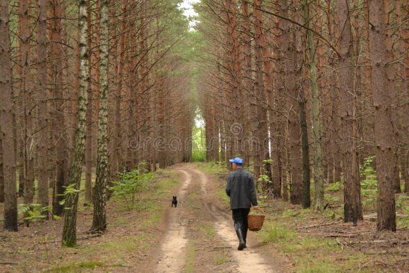De mens van Autumn Forest A met een mand van paddestoelen en een hond die langs de weg lopen stock afbeelding