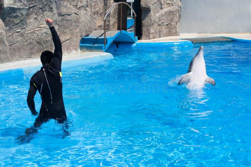 De mens van de bustrainer in zwart duikkostuum en de dolfijn in waterpool in dolphinarium met blauw water, bus onderwijzen dolfij stock foto