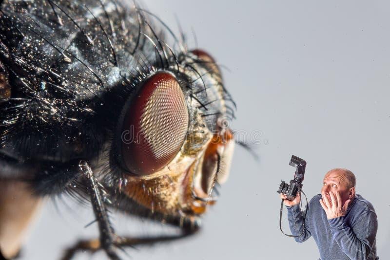 De mens van de kunstcollage met camera van reuzevlieg wordt doen schrikken die royalty-vrije stock afbeeldingen