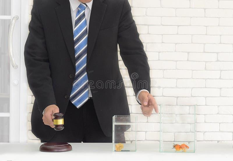 De mens in zwarte reeks met houten in hand veilingshamer wacht om de gouden vissen te veilen stock foto