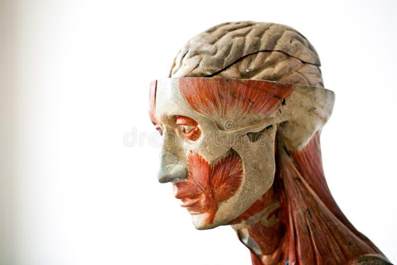 De menselijke anatomie van Grunge royalty-vrije stock afbeeldingen