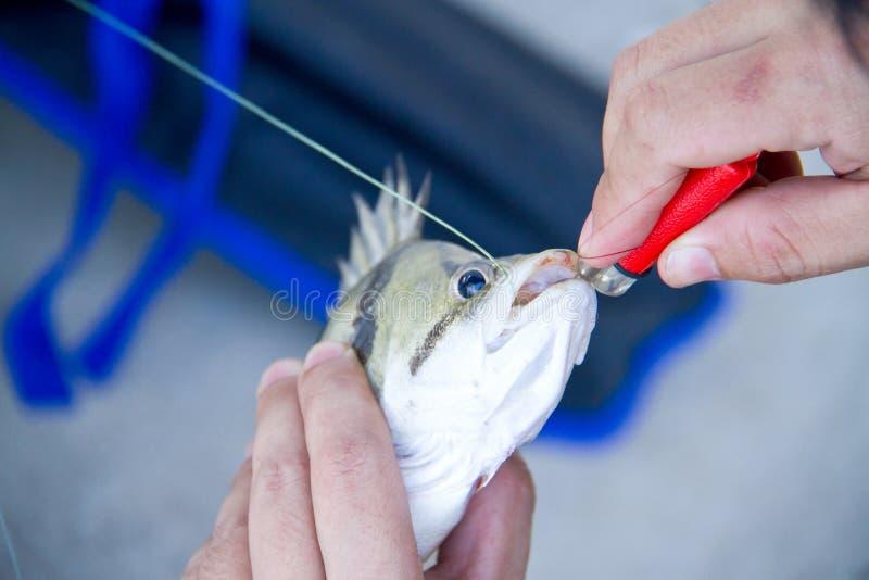 De menselijke hand probeert om haak uit de mond van vissen te verwijderen stock foto's