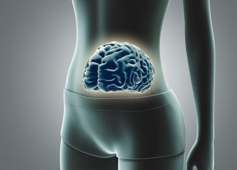 De menselijke hersenen in 3d maag, geven illustratie terug vector illustratie