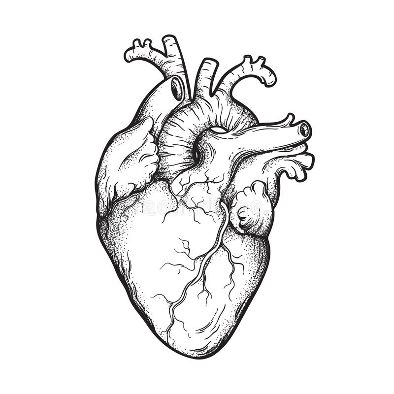 De menselijke kunst van de hart anatomisch correcte hand getrokken lijn en dotwork Flitstatoegering of de vectorillustratie van h stock illustratie