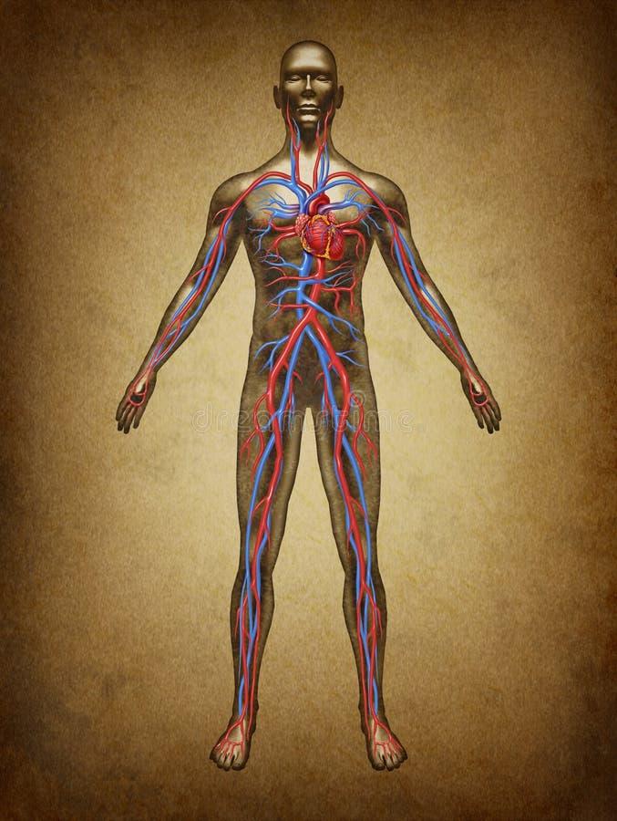 De menselijke Omloop Grunge van het Bloed vector illustratie