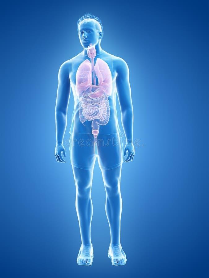 De menselijke organen vector illustratie