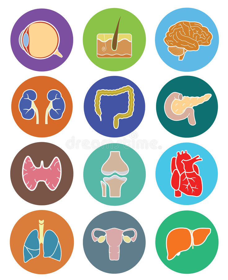 De menselijke reeks van het organenpictogram royalty-vrije illustratie