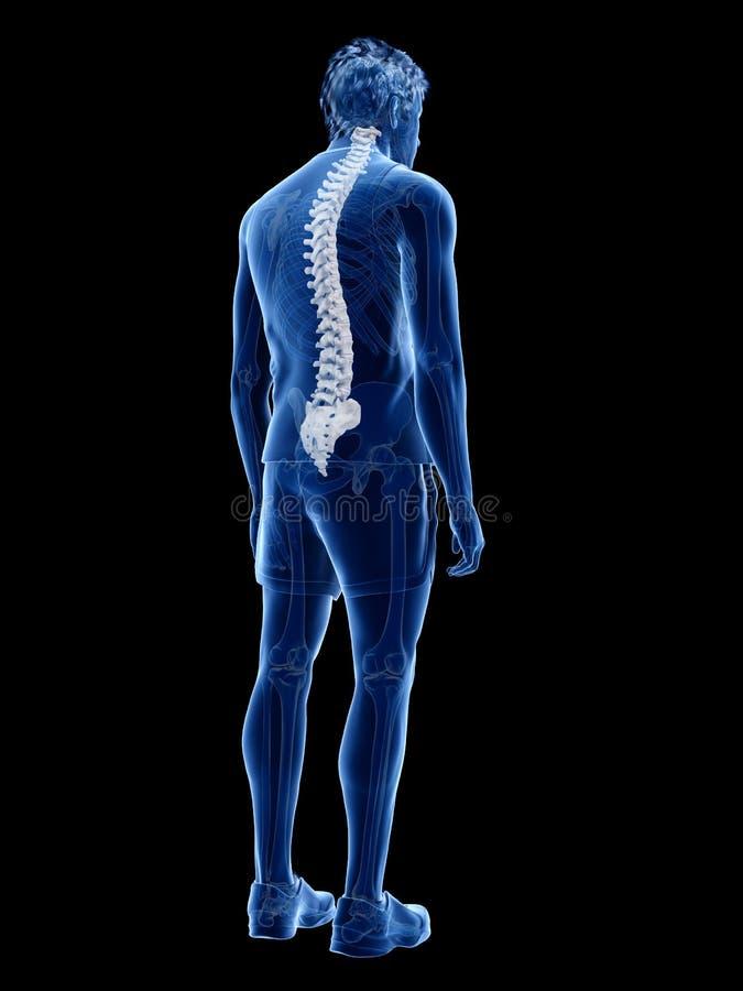 De menselijke stekel stock illustratie