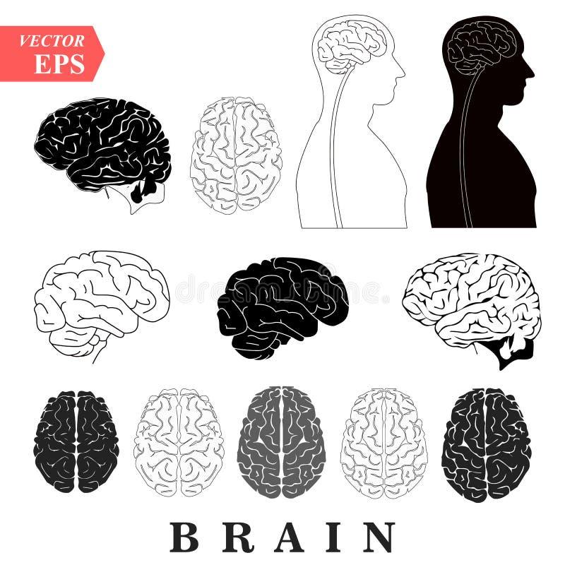 De menselijke vastgestelde voorafgaande inferieure zij en sagittal van het beginkwabben van het de meningen ruggemerg van Brain A vector illustratie