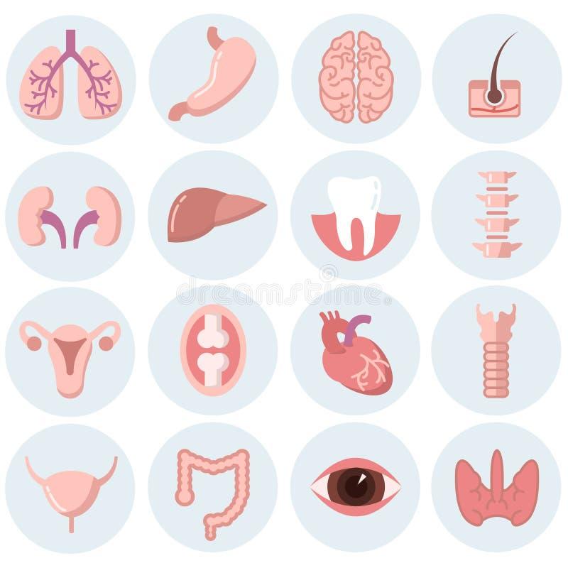 De menselijke vectorreeks van organen vlakke pictogrammen royalty-vrije illustratie