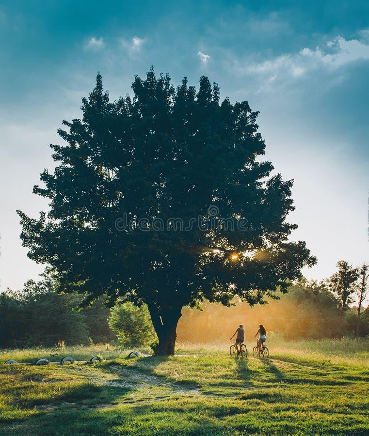 De mensen berijden een fiets bij zonsondergang met een zon onder een boom wordt geplaatst die nave stock afbeelding