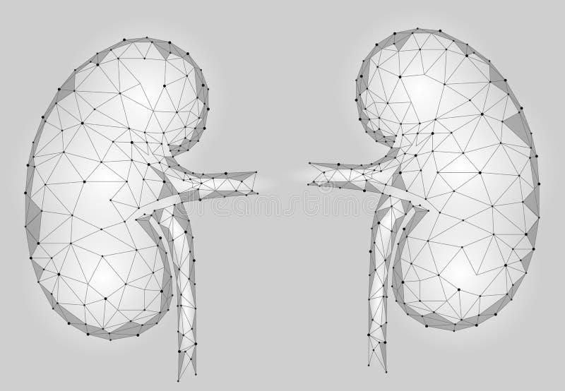 De mensen 3d laag poly geometrisch model van het nieren intern orgaan royalty-vrije illustratie