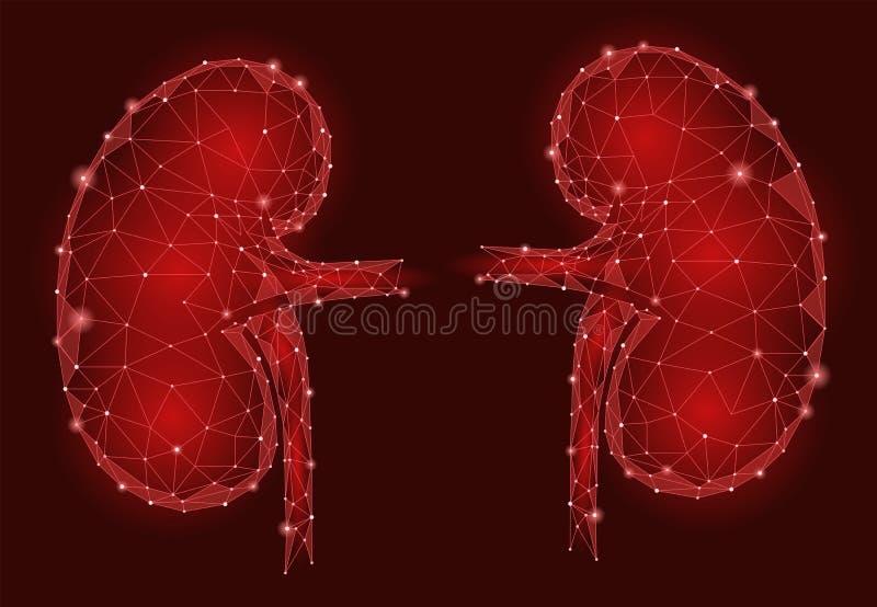 De mensen 3d laag poly geometrisch model van het nieren intern orgaan vector illustratie