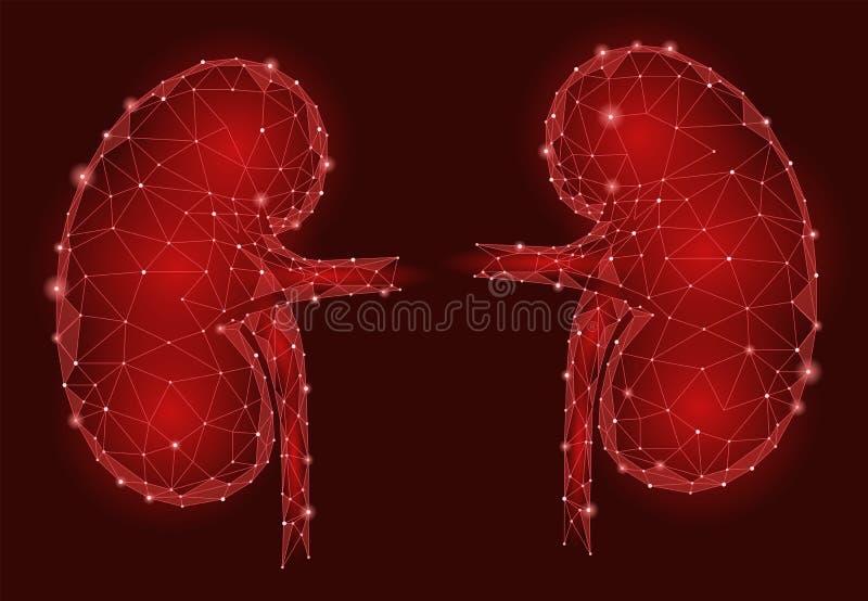 De mensen 3d laag poly geometrisch model van het nieren intern orgaan De geneeskundebehandeling van het urologiesysteem Toekomsti royalty-vrije illustratie