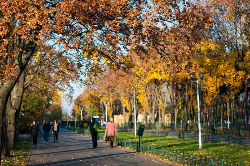 De mensen in de herfst parkeren royalty-vrije stock afbeeldingen