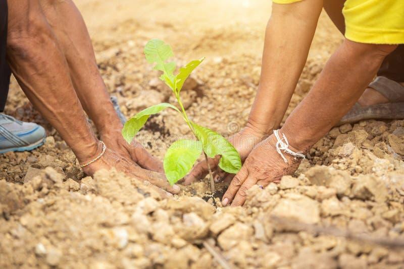De mensen die de boom planten voor vieren Koningsverjaardag van Thailand stock afbeeldingen