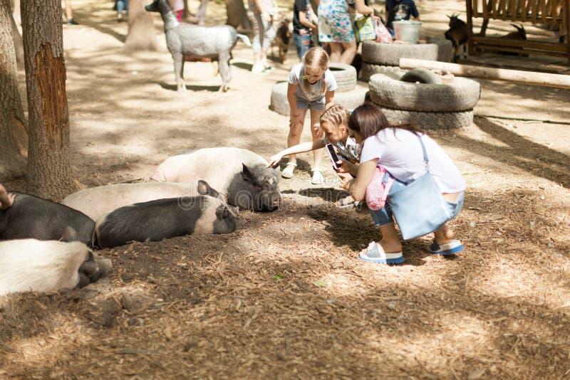 De mensen fotograferen grote varkensdieren in een contactdierentuin op een mobiel Park Kharkov de Oekraïne 2018 van telefoonfeldm royalty-vrije stock foto's