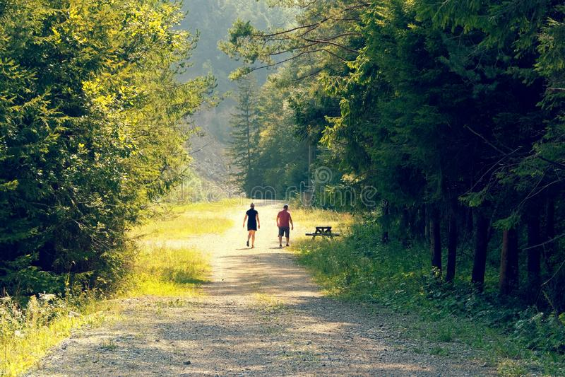 De mensen gaan bosbergweg in de zomer in de bergen stock afbeeldingen