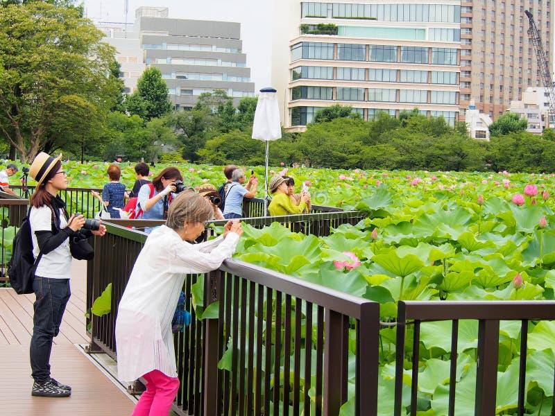 De mensen genieten van nemend foto bij lotusbloemvijver in Ueno-park stock afbeeldingen