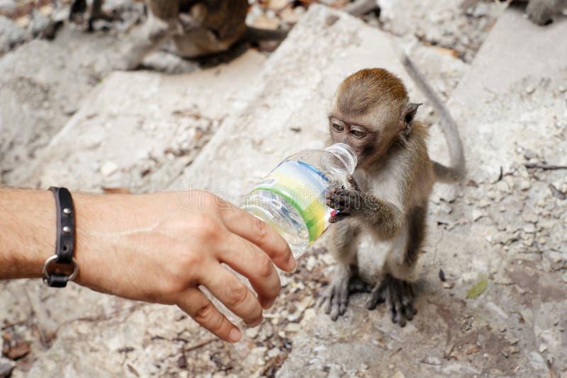 De mensen geven voor wild dier royalty-vrije stock foto