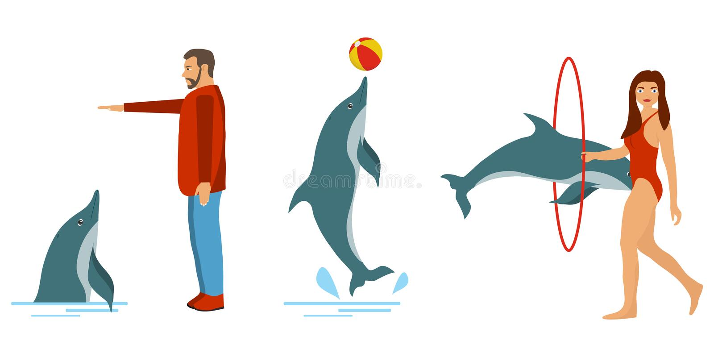 De mensen leiden dolfijnen op De dolfijn toont De mensen spelen met dolfijnen stock illustratie