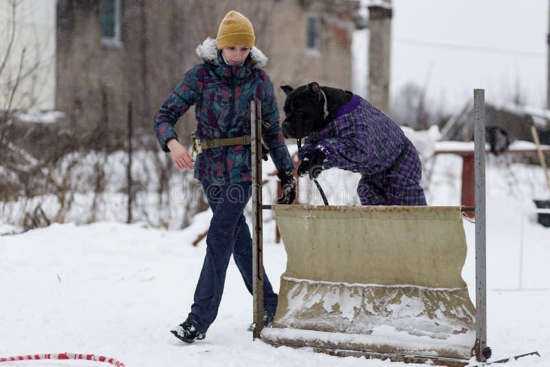 De mensen leiden hun honden, hond het lopen op royalty-vrije stock afbeelding