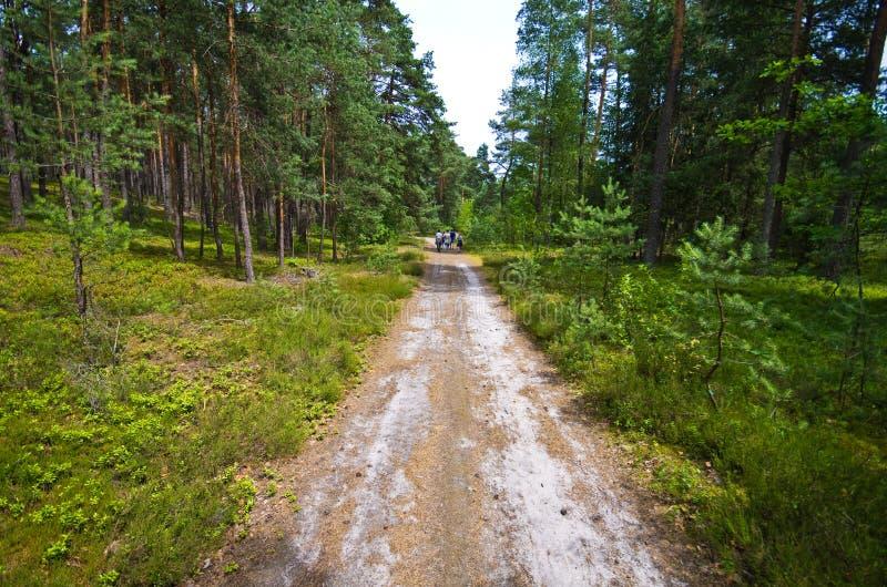 De mensen lopen in het bos van Roztocze Polen royalty-vrije stock foto