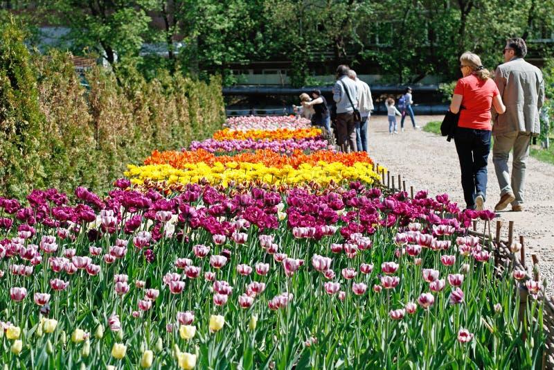 De mensen lopen langs de weg naast het gebied van tulpen in botanische tuin` Aptekarsky tuin ` in Moskou royalty-vrije stock foto's