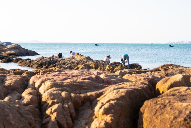 De mensen op stenen op de kust verzamelen mosselen, shells, zeevruchten royalty-vrije stock afbeeldingen