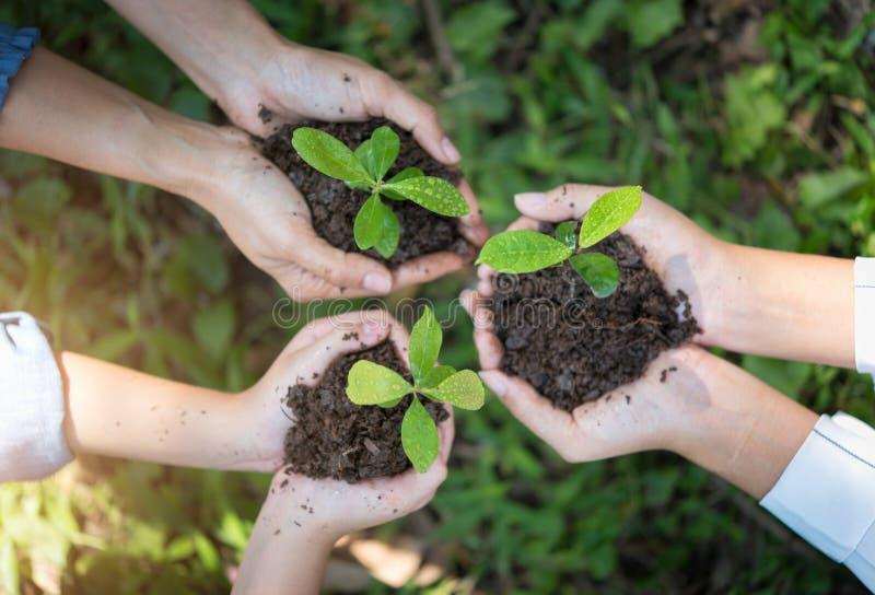 De mensen overhandigen groep die een zaad in grondlandbouw planten op natuurlijk stock fotografie