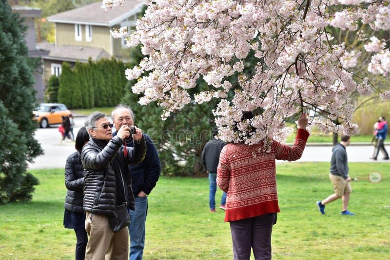 De mensen trekken de blomming takken voor hen stock afbeeldingen