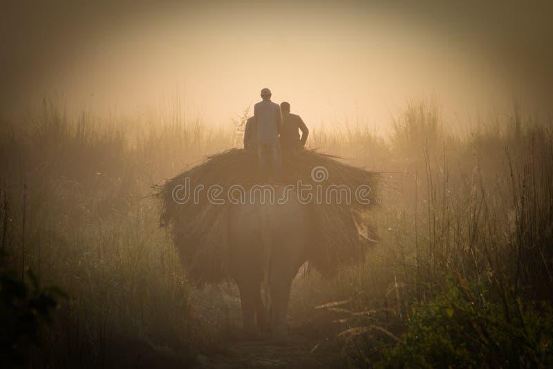 De mensen vervoeren Gras op Olifant in het Nationale Park van Chitwan in Nepal royalty-vrije stock fotografie