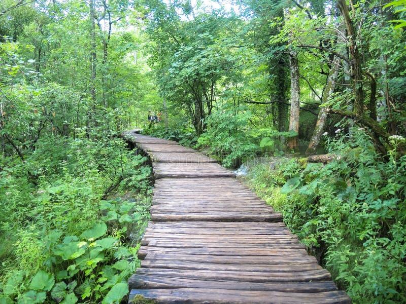 De meren van Plitvice royalty-vrije stock foto's