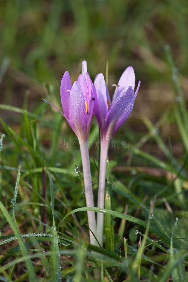 De met dauw bedekte bloemen van Nice stock foto