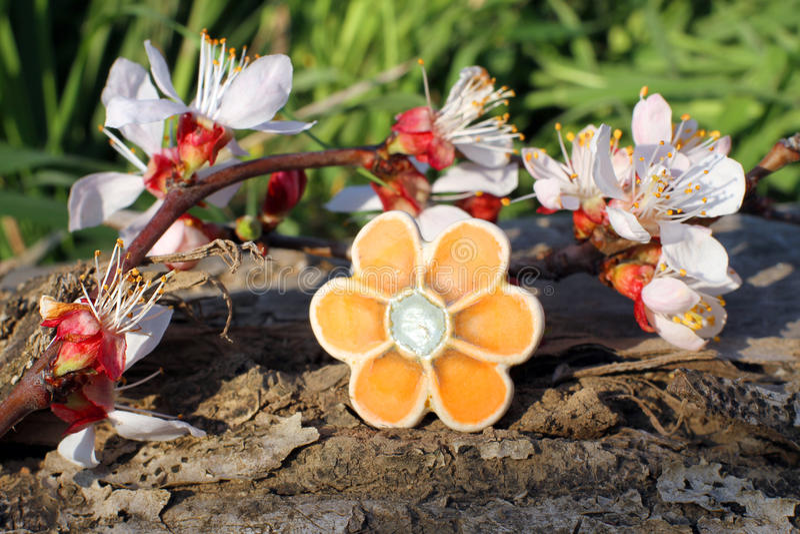 De met de hand gemaakte ring van de kleibloem met abrikozenbloesem royalty-vrije stock fotografie