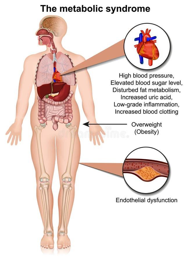 De metabolische systeem medische vectorillustratie die op witte infographic achtergrond wordt geïsoleerd stock illustratie
