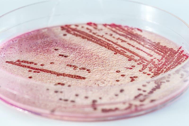 De microbiologie royalty-vrije stock fotografie