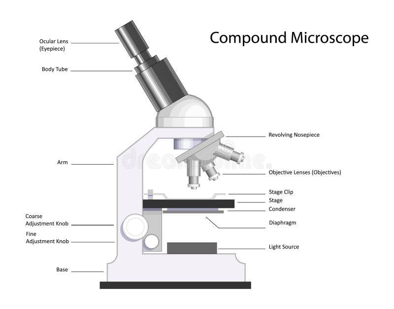 De Microscoop van de samenstelling royalty-vrije illustratie