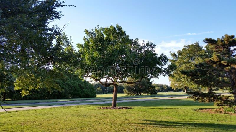De middenboom van de bos stock afbeelding