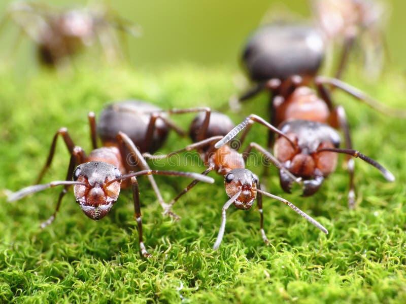 De mieren betekenen altijd gezinsverhoudingen, mierenhoop royalty-vrije stock foto's