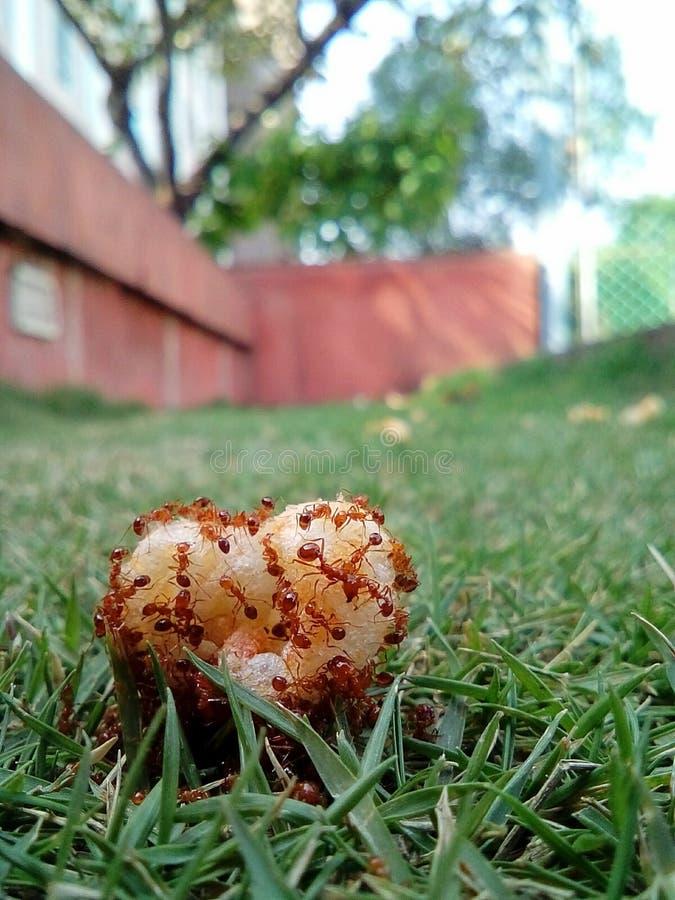 De mieren deelt het voedsel dan beter menselijk! royalty-vrije stock fotografie
