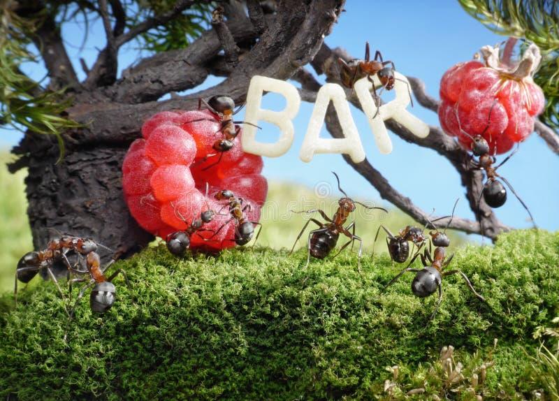 De mieren genieten van sappige vruchten, verse sapstaaf royalty-vrije stock afbeelding