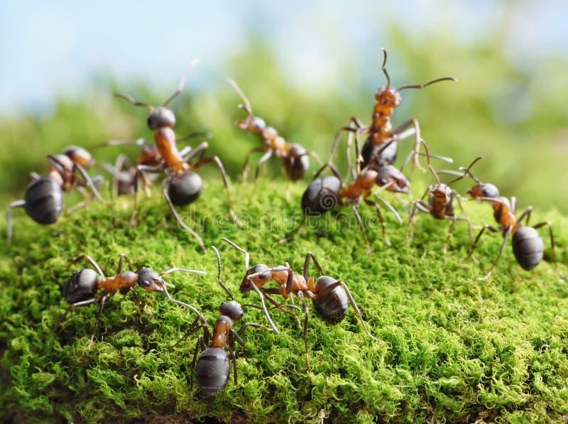 De mieren leiden tot netwerk in mierenhoop royalty-vrije stock foto's
