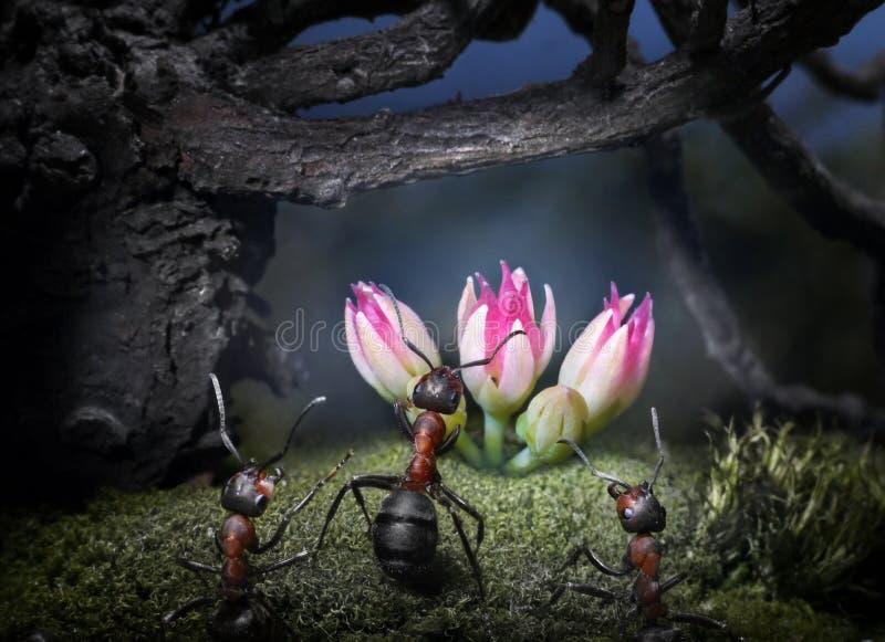 De mieren vinden geheime bloem stock afbeelding