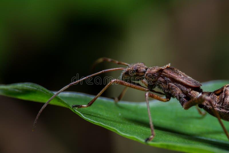 De mieren zijn nuttig voor biologische landbouw stock fotografie