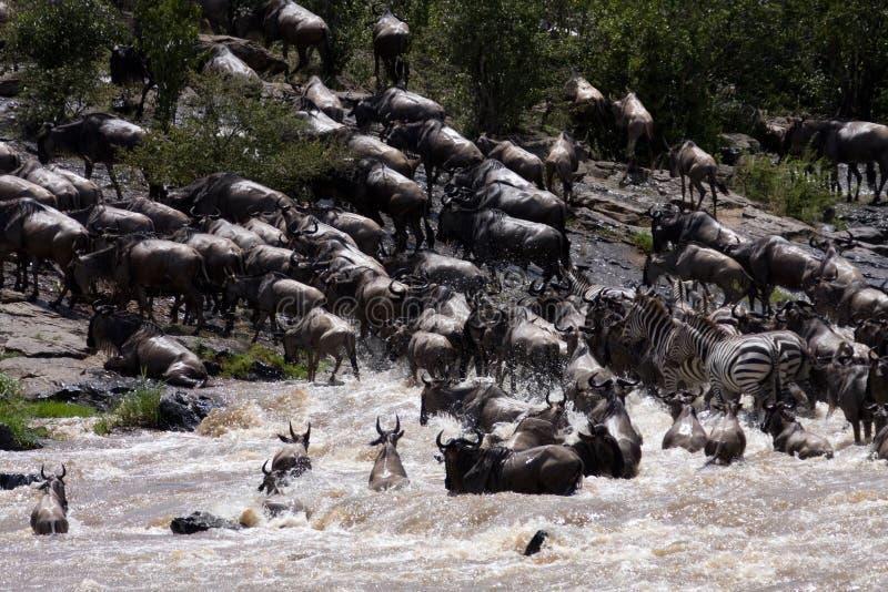 De migratie stock fotografie