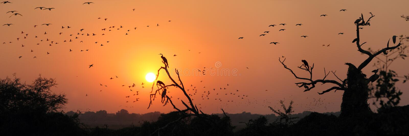 De migratie van vogels royalty-vrije stock afbeelding